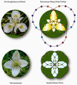 01 harmonics of nature  - flowers sacred geometry